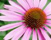 Alternatieve Artsenpraktijk voor Klassieke Homeopathie