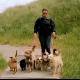 Kiki's hondenopvang Naarden
