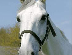 Paardrijden met korting.