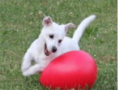 Jolly Egg voor honden.